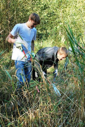 Removing invasives in October!