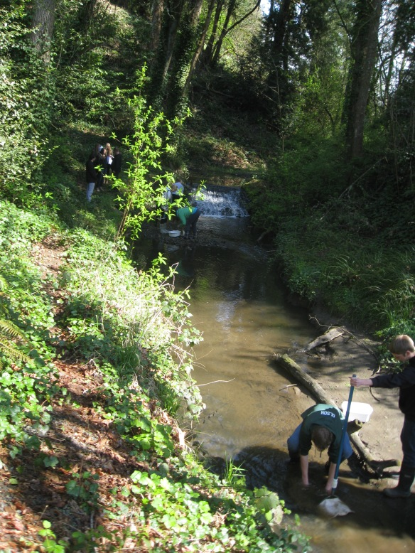 West Linn Student's collecting samples (possible macroinvertebrates) in Rinearson creek