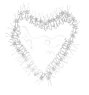 macro heart