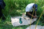Laying coffee bags around native plants